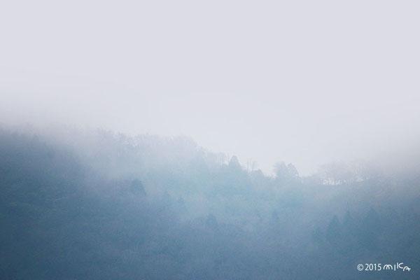 霧雨の山(能勢/穀雨の頃)