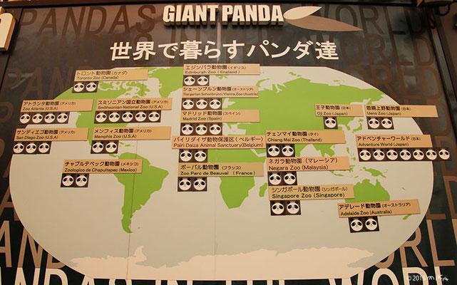 世界で暮らすパンダ達(白浜アドベンチャーの掲示板より)