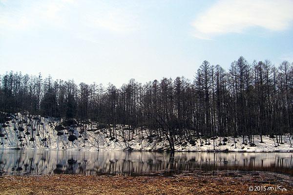 種池(長野県)4月