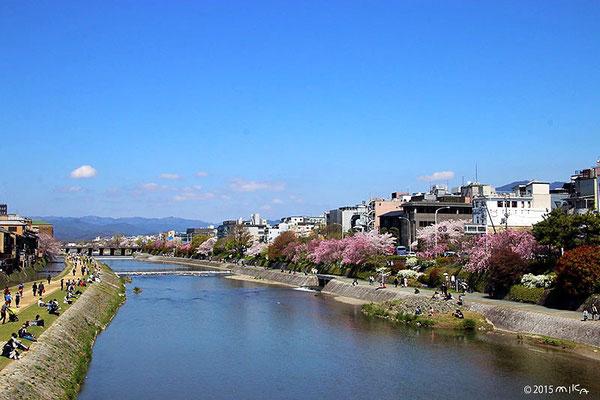賀茂川の春