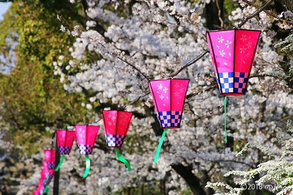 大阪城公園のお花見②