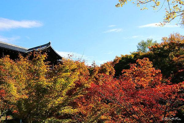 東福寺 庭から通天橋を眺める