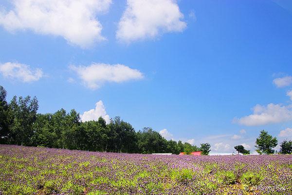 ラベンダー畑に赤い小屋(四季彩の丘)