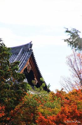 東福寺(入口外から 11月初旬)