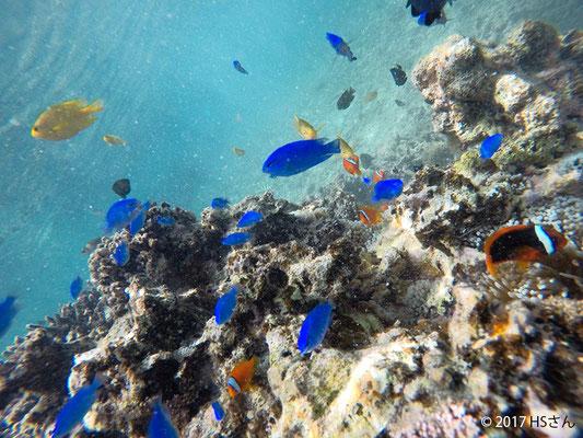 色とりどりの熱帯魚(静岡県HSさん撮影)