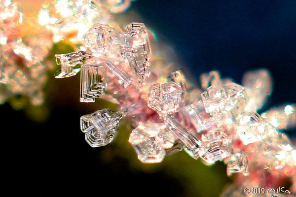 杯状の霜の結晶