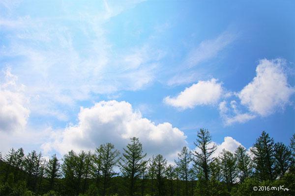 立秋ごろの空(池の散歩道)