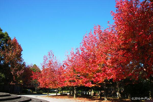 宝ヶ池公園(11月)①