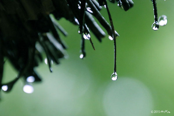 かやぶき屋根に雨(6月)