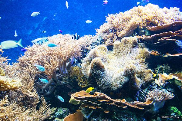 生体サンゴ水槽(須磨水族館)