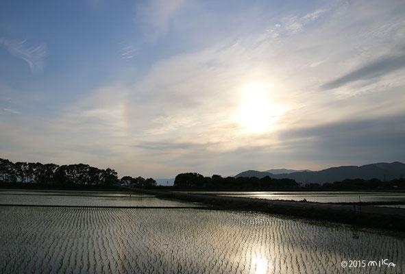 水田にうっすら虹(日暈)