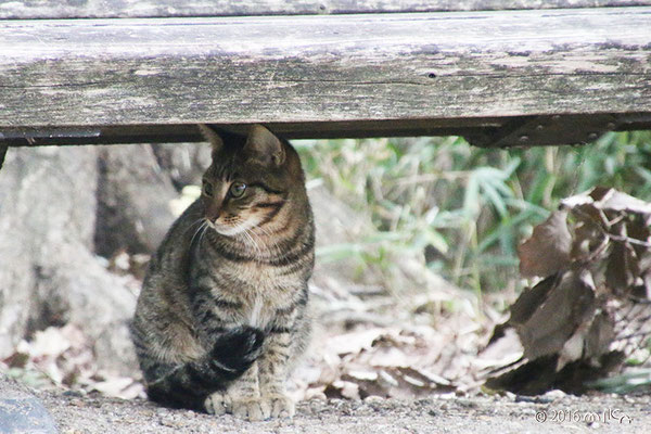 ベンチの下のトラネコ
