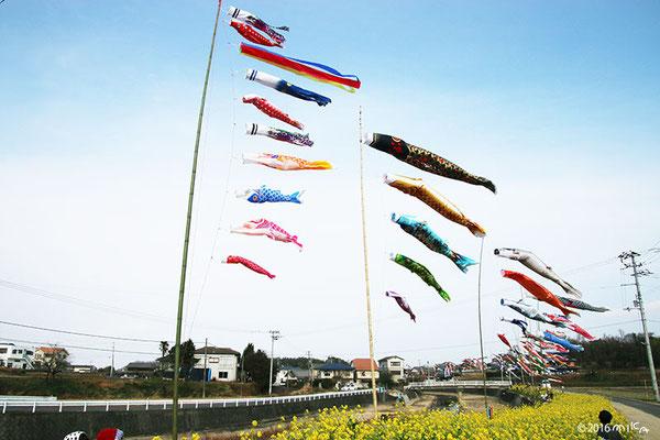 正月を祝うこいのぼり(高松春日川土手沿い)