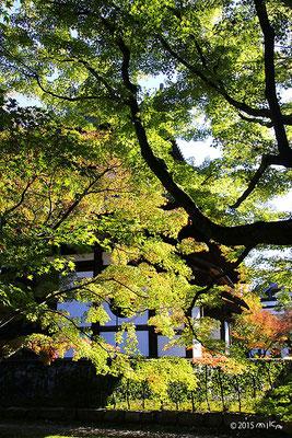 東福寺の少し色づき始めたころ(11月上旬)