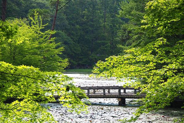 青紅葉の長谷池