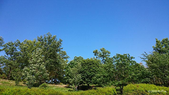 五月晴れの公園(箕面東公園/大阪府)