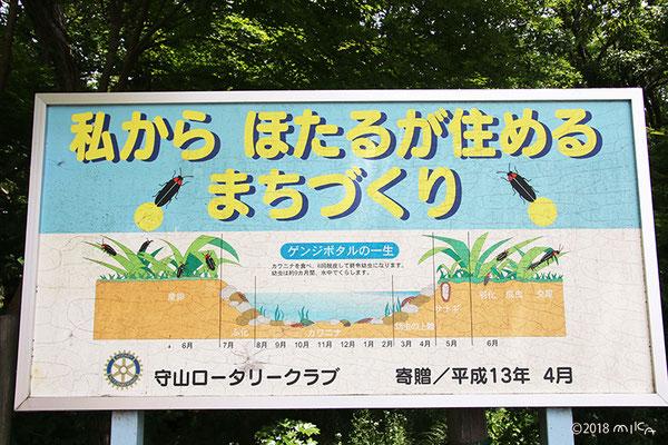 ゲンジボタルの一生(守山市ほたるの森資料館の前の掲示板/守山ロータリークラブ)