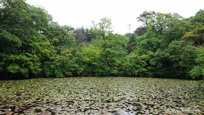 神戸市立森林植物園 長谷池(スイレンの池)