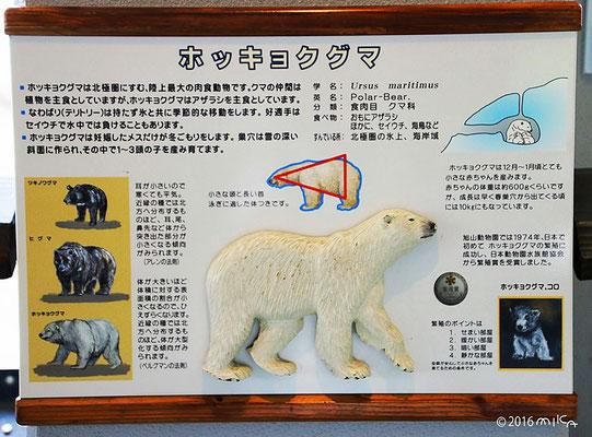 ホッキョクグマの説明(旭山動物園の看板)