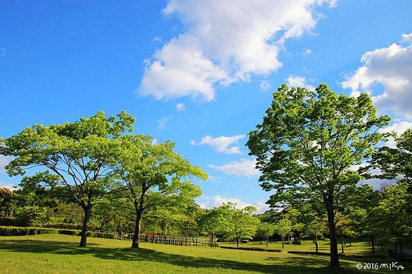 五月晴れの公園