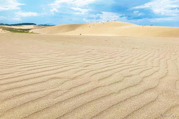 鳥取砂丘の馬の背と風紋