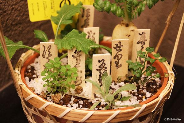春の七草の寄せ植え(観賞用)