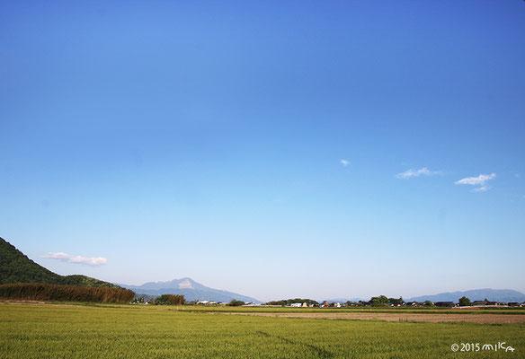 青空の麦畑(滋賀県)