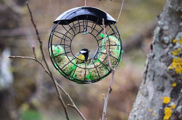 Ein wenig Futter-Unterstützung für die Vögel ist im Moment noch anzuraten - die Kohlmeise freut sich! Foto: Sandra Borchers