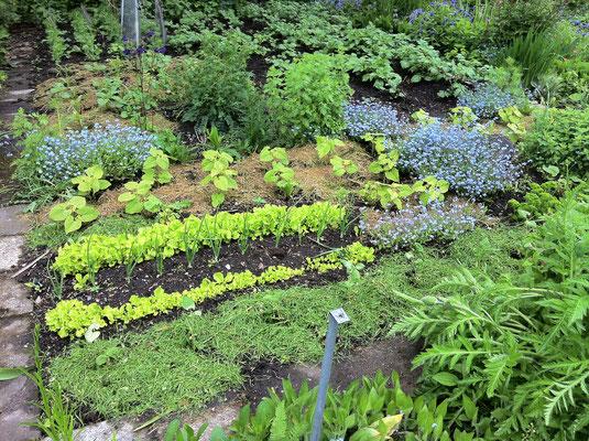 Vorbildlich: Eine gemulchte Mischkultur, gut für Boden und Pflanzen! Foto: Sandra Borchers