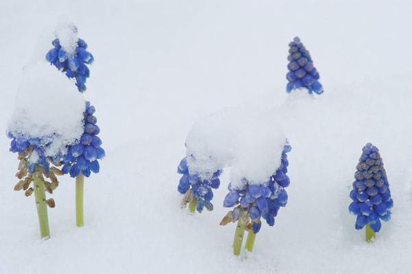 Schnee im Frühling: März 2008 Foto: Sandra Borchers