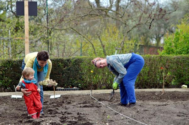 Hier ein Beispiel, warum die traditionelle Kartoffelanbaumethode nicht rückenschonend ist! ;-) Foto: Sandra Borchers