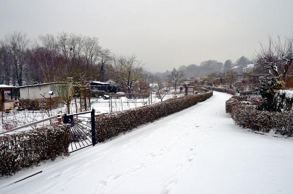 Schön weiß, die Kleingartenanlage am 16. Januar 2013 Foto: Sandra Borchers