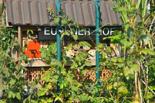 Hier sieht man, wie das Insektenhotel samt Florfliegenkasten vor dem Einzug der Wespen aussah. Foto: Sandra Borchers