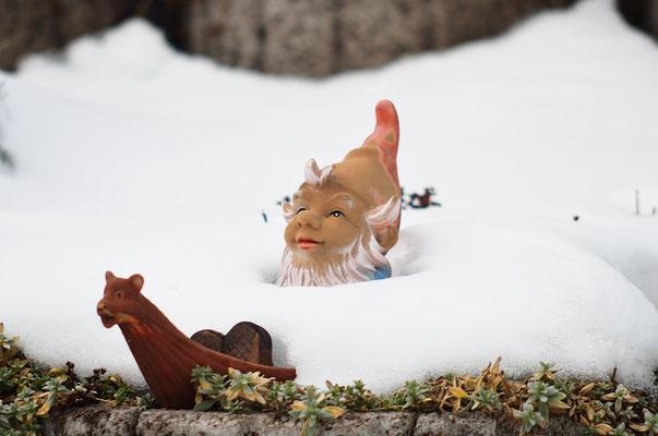 Zwerg begraben unter Schneelawine!? Foto: Sandra Borchers