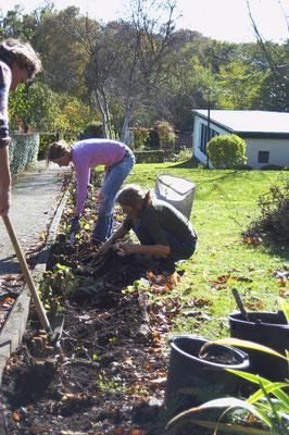 Bei einer Gemeinschaftsarbeits-Aktion wurden die Wurzen freigelegt...Foto: Sandra Borchers