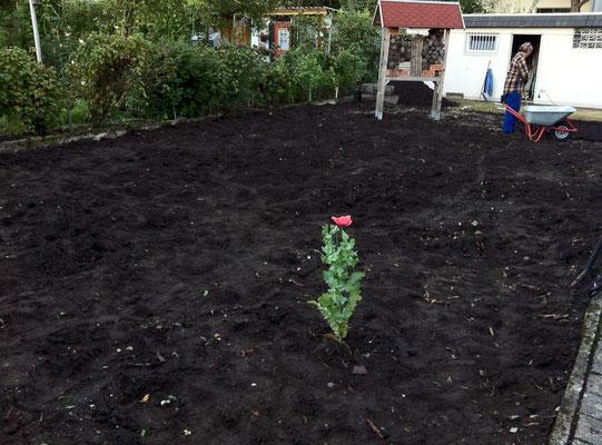 """Das Eregebnis: Manch ein Gärtner würde jetzt von einem """"aufgeräumten Garten"""" sprechen ;-) Foto: Sandra Borchers"""