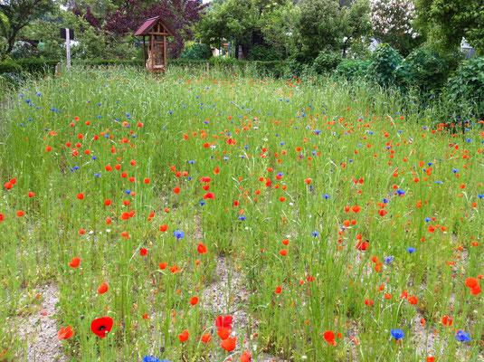 Update 10. Juni: Die Blüten werden immer mehr!  Foto: Sandra Borchers