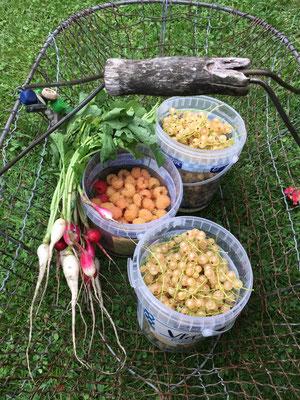 Unglaublich viele Beeren gab es 2018 Foto: Sandra Borchers