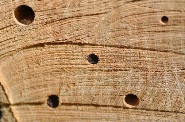 Auch im neu bestückten Insektenhotel tut sich was: In der Mitte und unten links sind die Bohrlöcher schon vergeben! Foto: Sandra Borchers