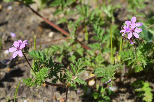 Die ersten Blüten! Foto: Sandra Borchers
