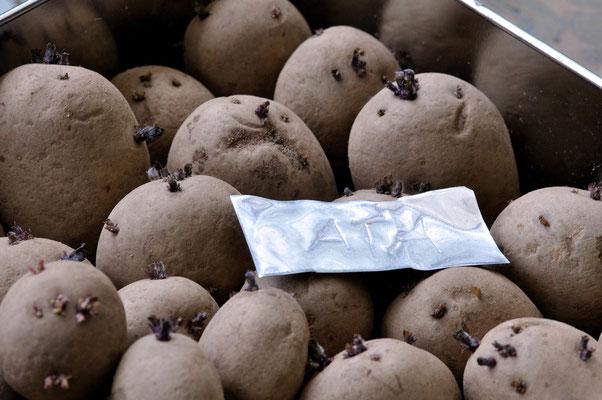 Historische Kartoffeln Teil 1... Foto: Sandra Borchers