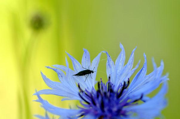 ...auch ein Käfer...Foto: Sandra Borchers