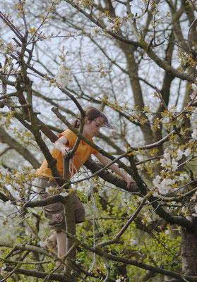 ...und wer braucht schon beim Baumschnitt eine Leiter - wir haben kleine Kletterkünstler vor Ort! - Foto: Sandra Borchers