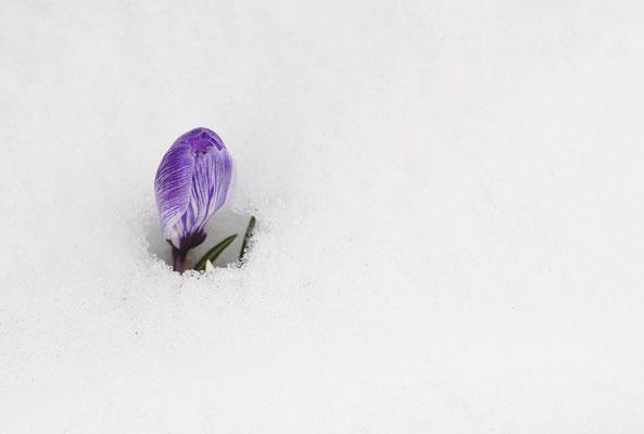 Ein einsamer Kämpfer...Foto: Sandra Borchers