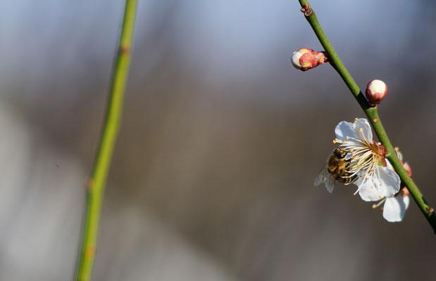 Die erste Biene! Foto: Sandra Borchers