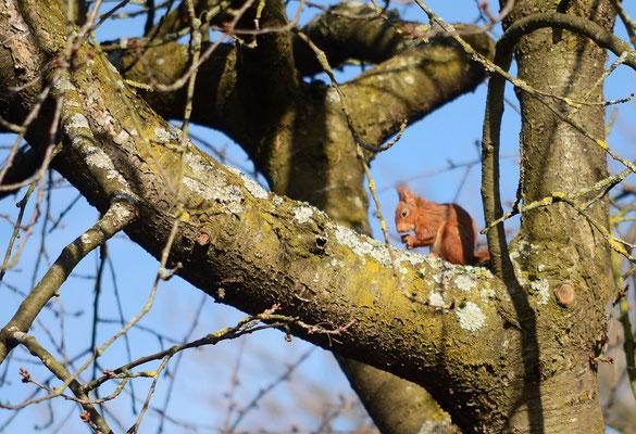 Aber nicht nur am Boden, auch in den noch blattleeren Bäumen gibt es etwas zu entdecken! Foto: Sandra Borchers
