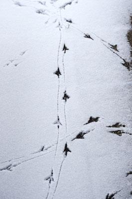 Vogelkreuzung. Foto: Sandra Borchers