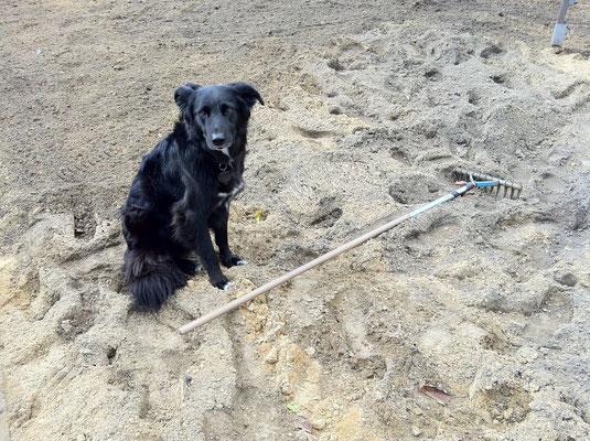 Es hat sich noch ein Helfer gefunden! Foto: Sandra Borchers