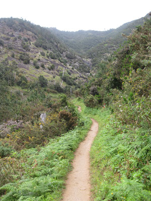 Schöner Trail Richtung Pass