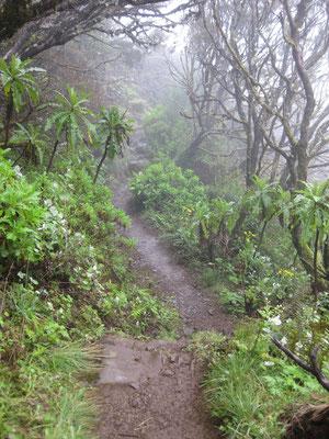 Spannender Trail durch das Zentralgebirge